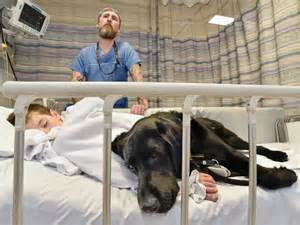 Comfort Hospital Loyal Dog Jumps On Hospital Bed To Comfort 9 Year Old Boy