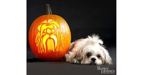 sugar and spice shih tzu shih tzu 22 downloadable breed pumpkin stencils popsugar pets