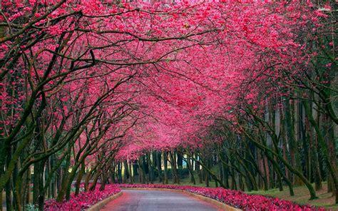 imagenes de paisajes rosas colecci 243 n de paisajes naturales en hd my pictures world