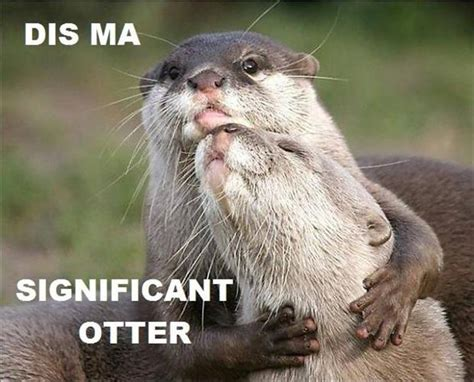 Funny Otter Memes - funny pictures 41 pics
