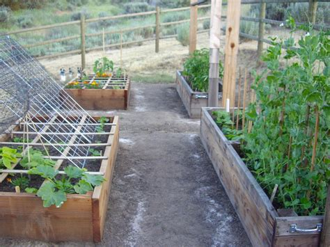 homestead vegetable gardening homestead revival benefits and construction of raised