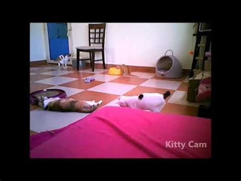 Critter Room Live Stream | kitty cam th october semi live stream of shelter rescues