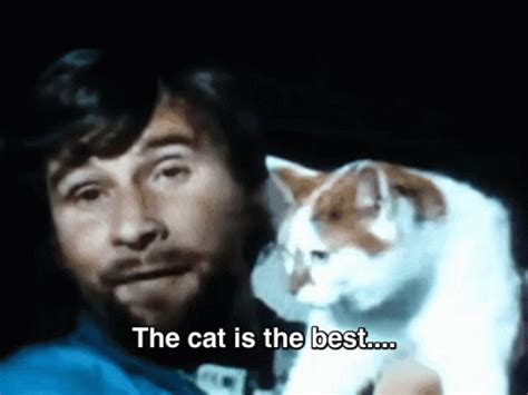 best gif cat friend best gif best discover gifs