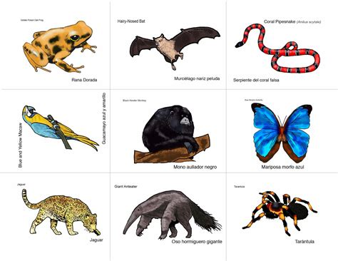 printable rainforest animal cards rainforest animals game