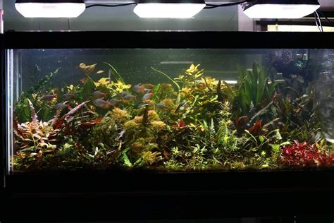 aquaray led lighting reef planted aquarium lights