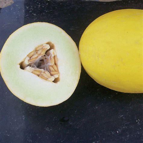 F1 Canary Sed goldilocks f1 hybrid melon seeds ne seed