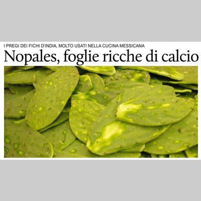 alimenti contenente calcio puntodincontro mx salute nopales foglie ricche di calcio