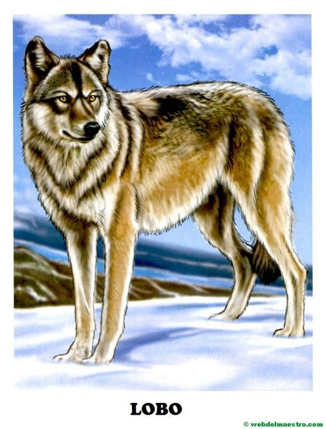imagenes animales salvajes para imprimir dibujos de animales salvajes para imprimir web del maestro