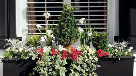 winter window boxes winter window box southern living