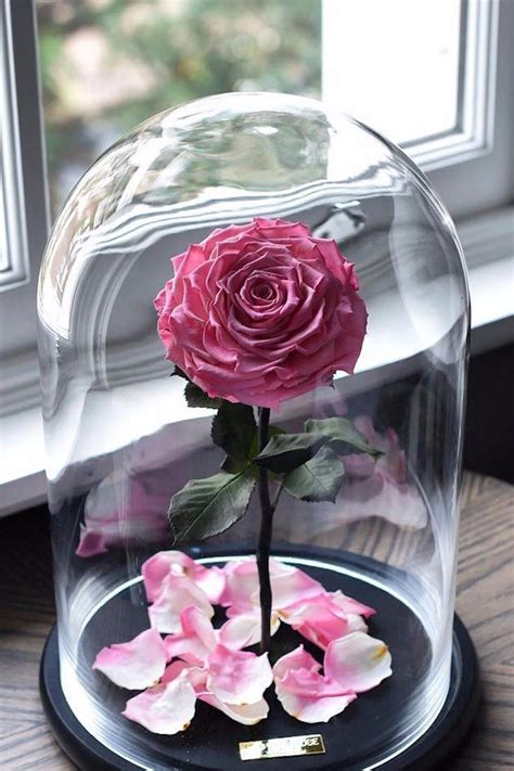 enchanted rose that lasts a year best 25 enchanted rose ideas on pinterest beauty and
