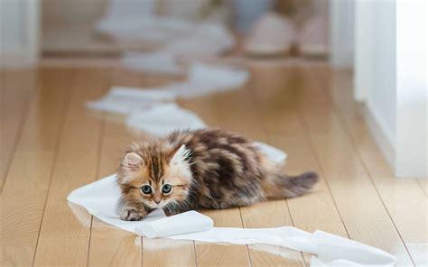 cat wallpaper rolls 12 kitten chrome themes desktop wallpapers more for