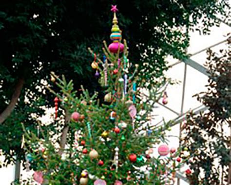 extend the life of your christmas tree with proper