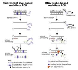 pcr product as template the real time pcr digest bitesize bio
