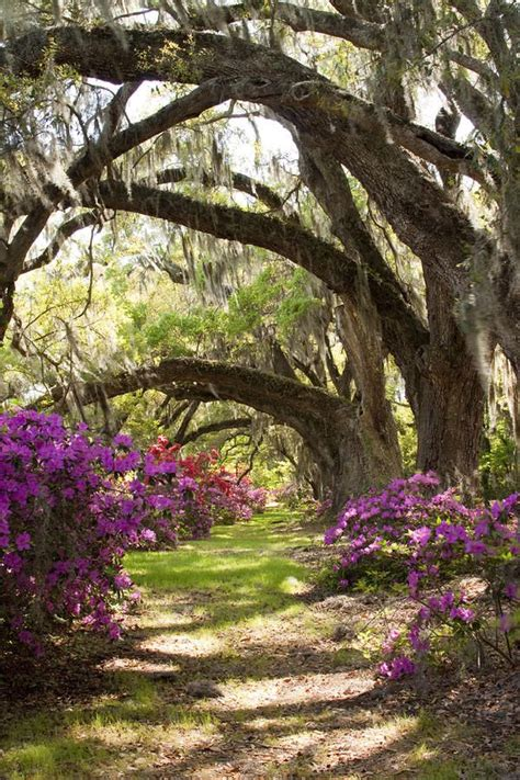 Live Oak Gardens by 1000 Images About Trees Themed Wedding On
