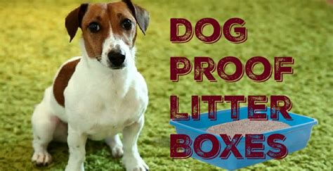 how to litter a puppy the best proof litter boxes how to keep dogs out of cat litter