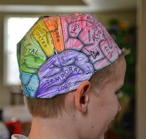 Psychology And Your 3ed a school of fish brain hats cerebral cortex