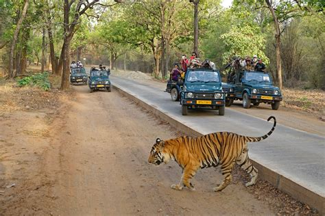 boat registration india tiger s domain guided photo expedition to bandhavgarh