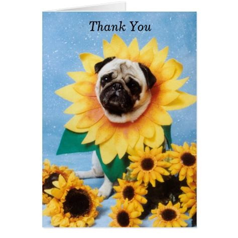 pug saying thank you black pug breeds picture