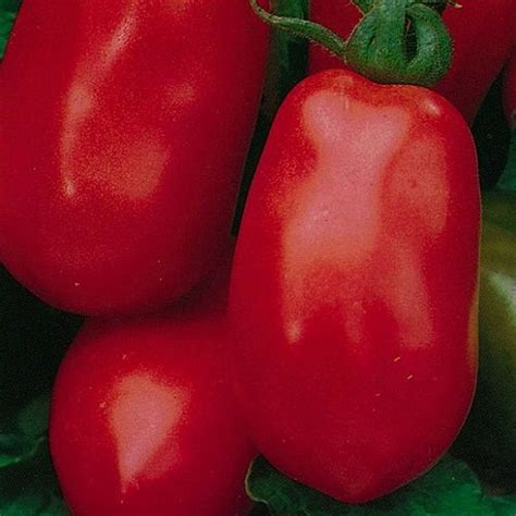 Tomato Roma Vf email to a friend