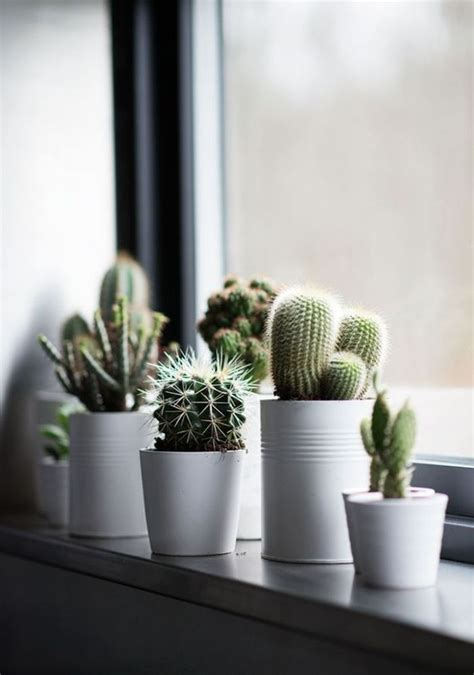 fensterbrett pflanzen befestigen fensterbank dekoration 57 ideen wie sie das potenzial