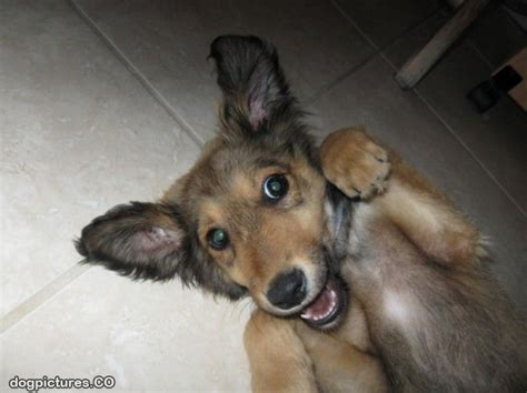 arf dogs pictures of dogs www imgkid the image kid has it