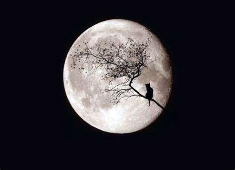 imagenes tumblr luna calendario lunar septiembre luna azul