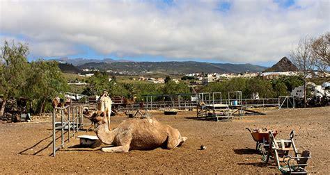 cercasi piastrellista camel park tenerife info