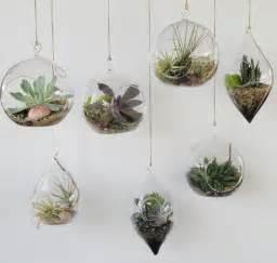 hanging terrarium pictures and ideas