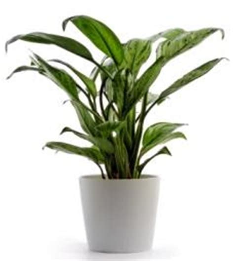 large low light indoor plants attractive house plants 2015 low light house plants