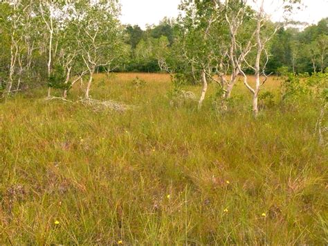 plants in the tropical grassland grasslands a global conservation priority ecoprimate