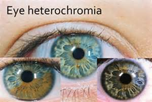 eye color determination eye color genetics chart memes