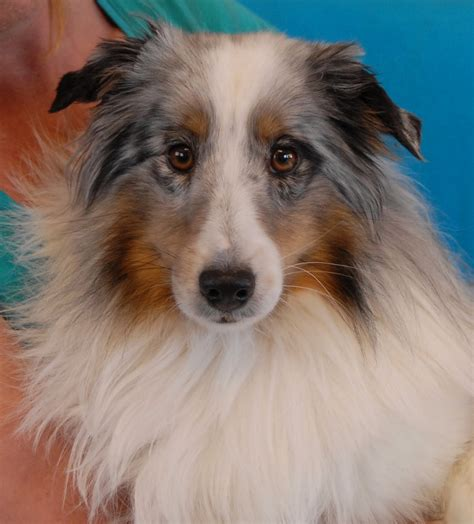 spca puppies for adoption spca puppies for adoption breeds picture