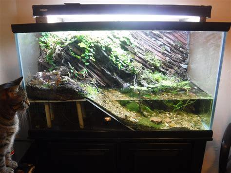 gallon paludarium aquariums