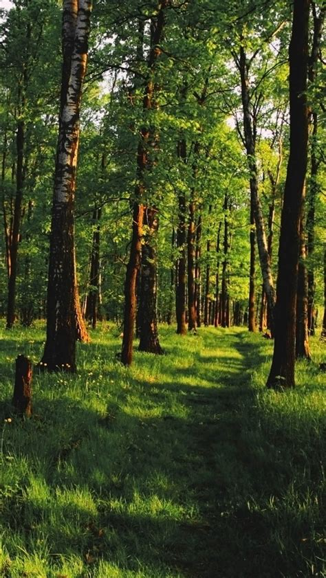 wallpaper iphone forest forest top iphone 5 wallpapers com