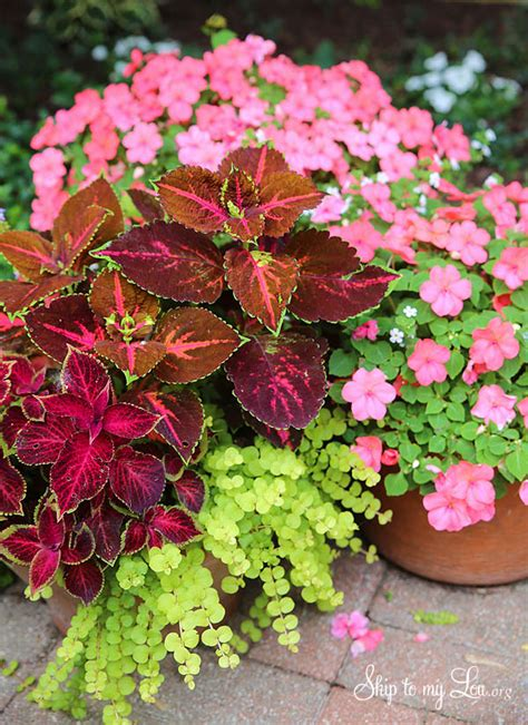 beautiful container gardens how to plant beautiful container gardens skip to my lou