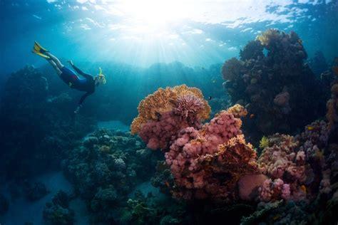 wallpaper keindahan alam bawah laut nikmati keindahan alam bawah laut di pulau samalona
