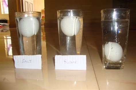 Egg Sinks In Water by An Experiment With Just Water Egg And Salt Egg