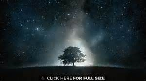 4 black tree black tree galaxy hd wallpaper