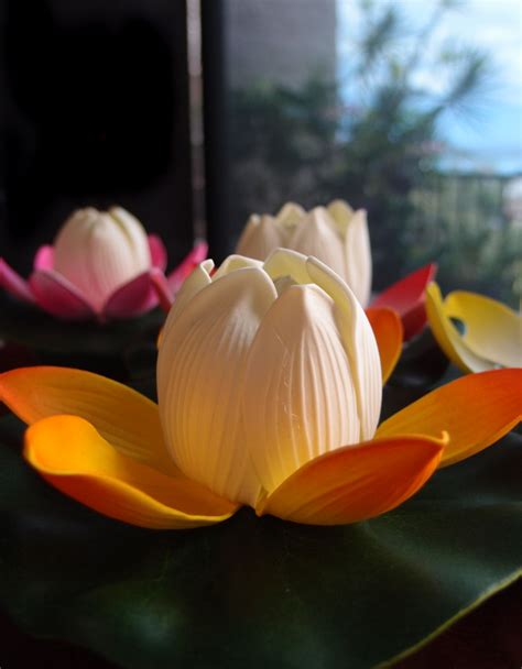 colorful flowers picture orange flowers in bloom light 6 quot color changing floating water lotus flower w light