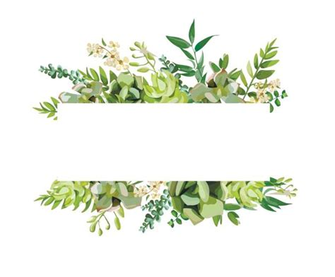 Soft Bordir Flower 2 royalty free succulent plant clip vector images illustrations istock