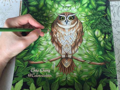 secret garden coloring book colored pencil secret garden the owl s background coloring coloring