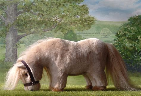 pony at new grazing shetland ponies laurel designs