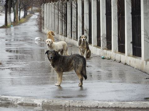 four dogs julie sanders four paws uk country manager visited romania last week to assess the