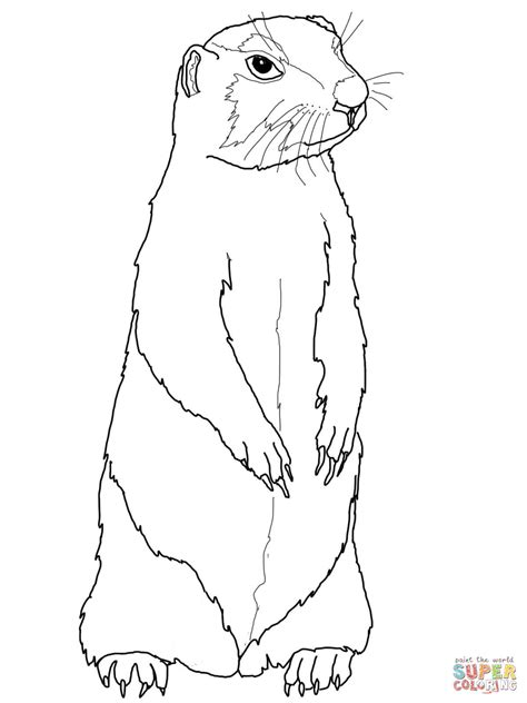 coloring page prairie dog 301 moved permanently