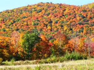 peak fall colors new affordable fall foliage hiking and kayaking vacations