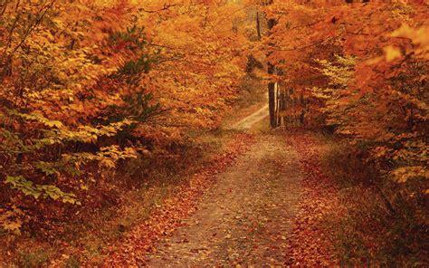 desktop themes autumn desktop wallpapers autumn road desktop wallpapers