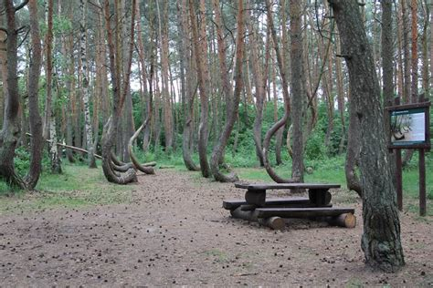 crooked forest west pomerania poland mother nature at crooked forest poland images gallery details