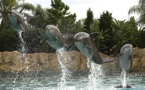 hd  dolphins  discovery cove wallpaper