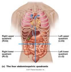 Organs structures amp glands
