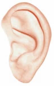 oreille humaine t 233 l 233 charger des vecteurs gratuitement